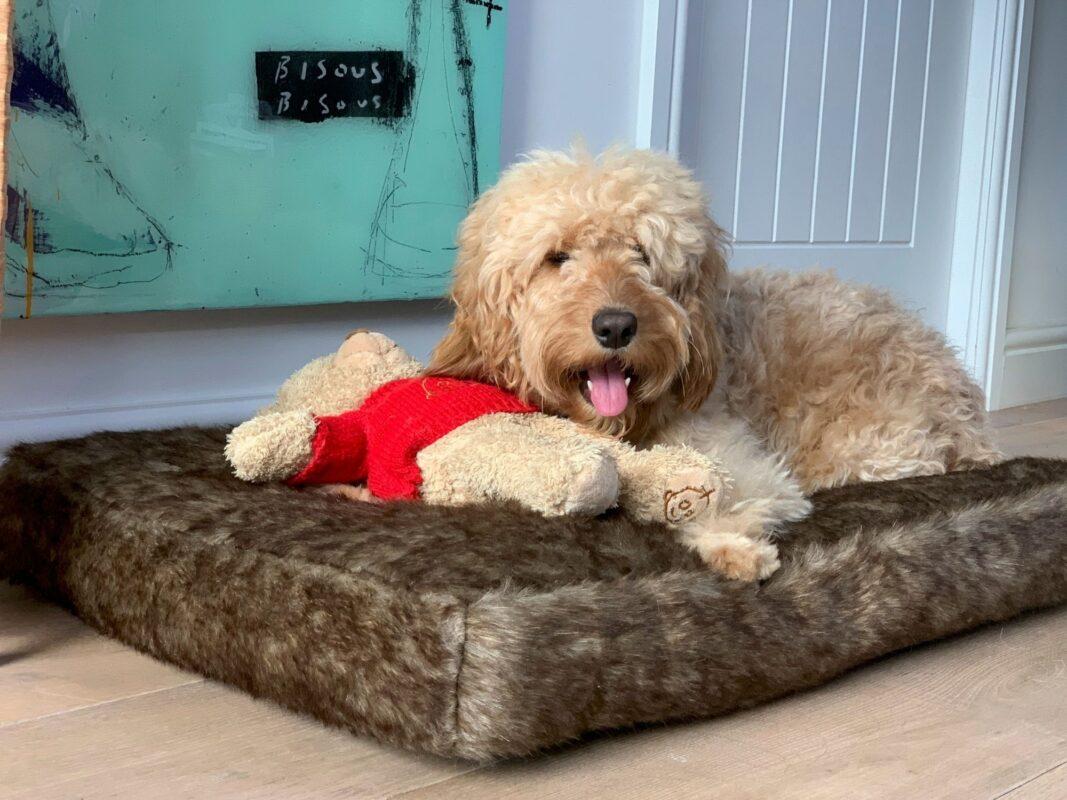 Millie mats Brown Bear Dog bed