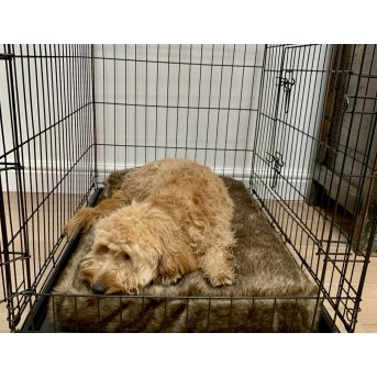 dog on a pet bed in a crate