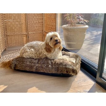dog on pet bed on the floor near a window