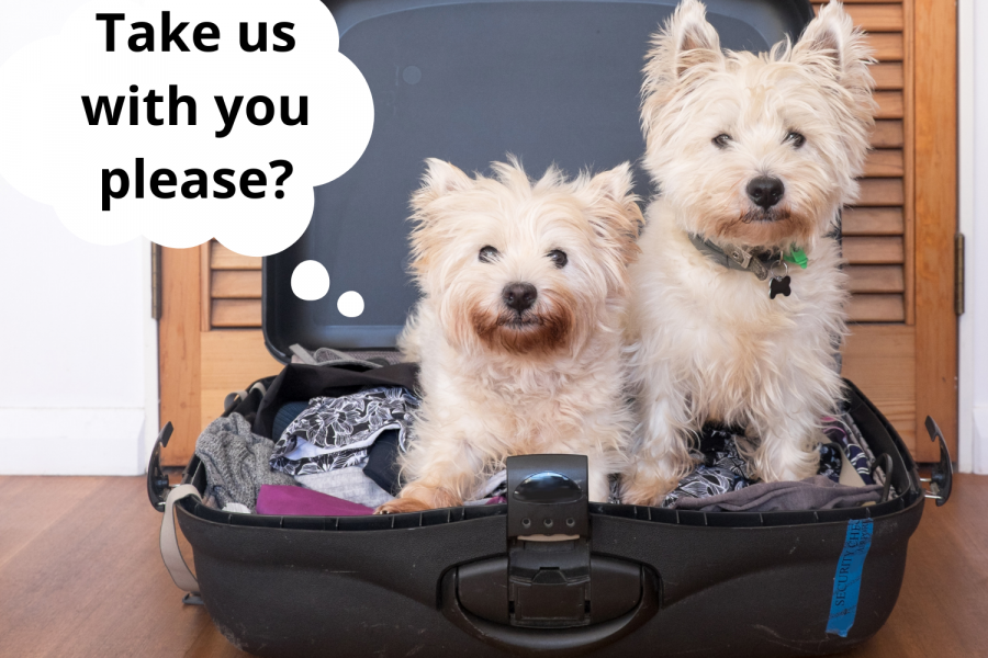Millie Mats - two dogs in a suitcase with separation anxiety