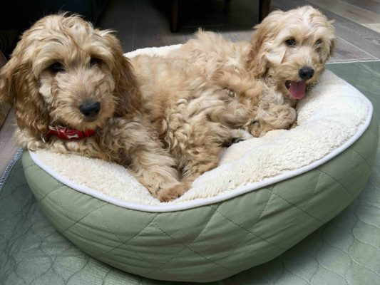 millie mats puppies in bed with mat